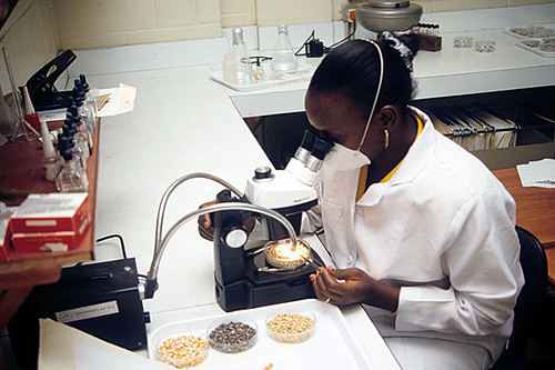 african american stem science free resources downloads